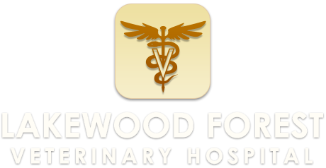 Lakewood Forest Veterinary Hospital